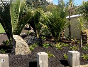 planting trees whangarei